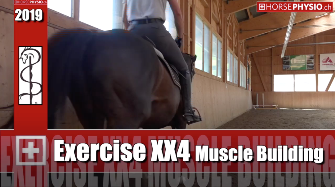Exercise xx4 for Muscle building