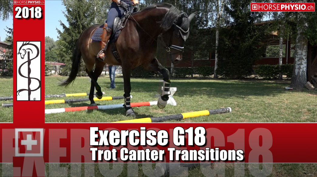 Exercise G18 Trot & Canter Transition