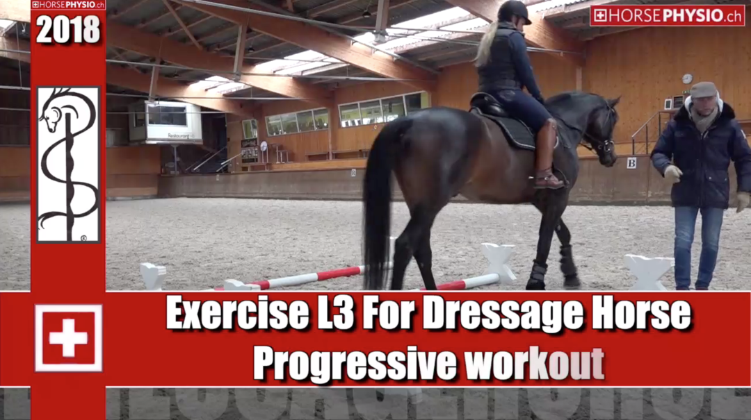 Exercise L3 little winter training for Dressage Horse