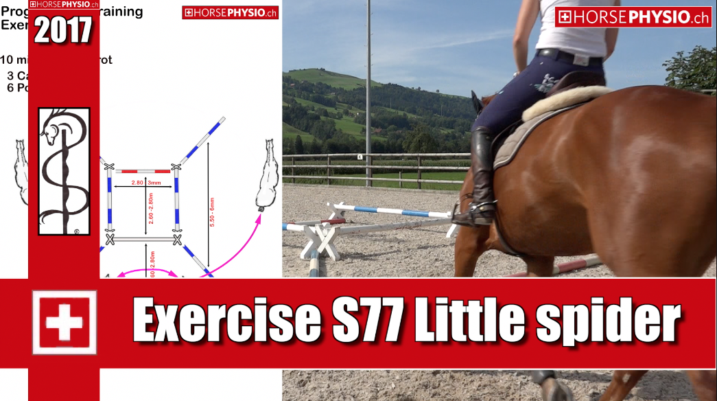 Exercise S77 Muscle Building